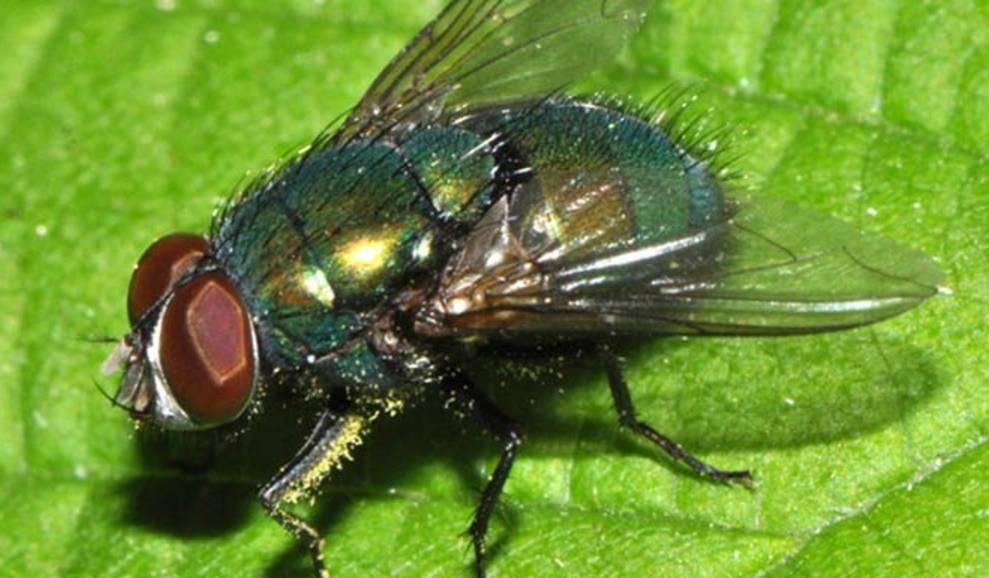 mosca1-380x270